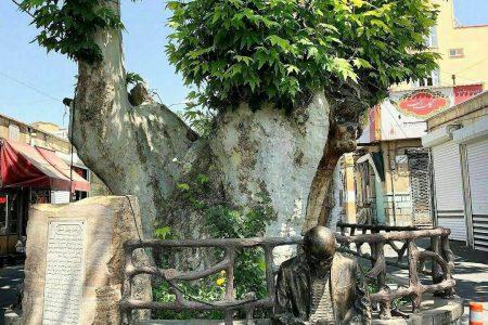 درخت چنار ۱۲۰۰ ساله اسکو