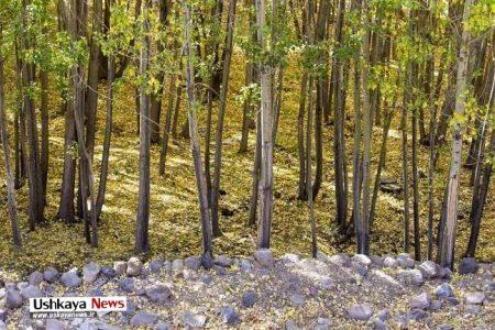 تصاویر پاییزی طبیعت باغ شهر اسکو